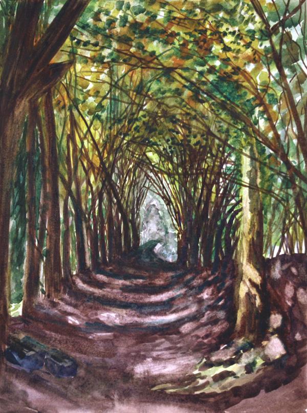 Sunlit woodland lane
